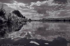 Fotowedstrijd-Tim Wengelaar